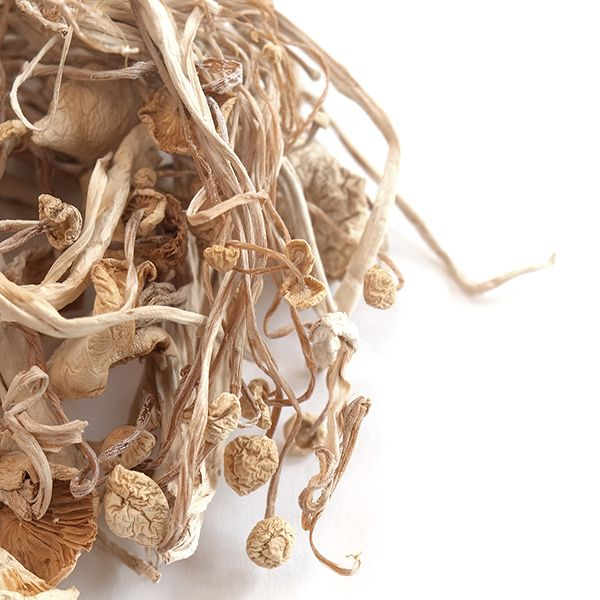 Enoki Mushrooms, Whole (Dried)