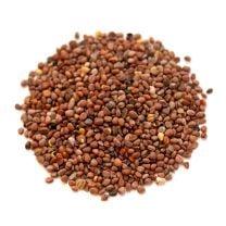 Daikon Radish Seeds, Organic