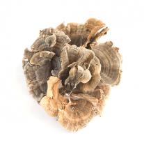 Turkey Tail Mushrooms, Dried