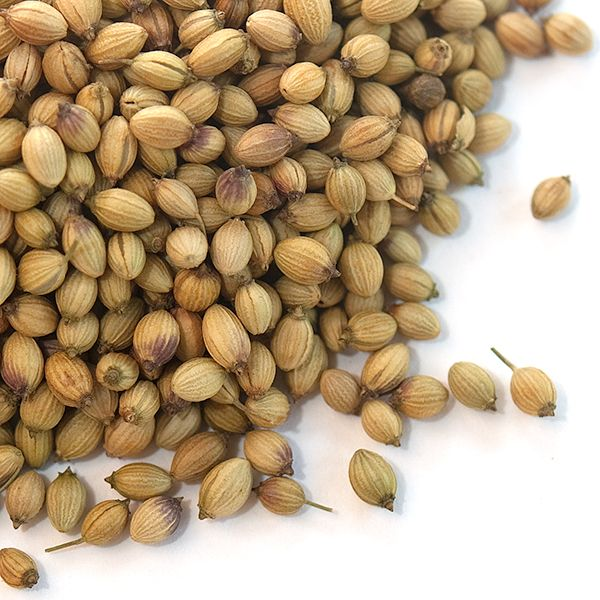 Extra Bold Coriander Seeds