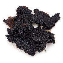 """Vanilla Bean Seeds (Vanilla """"Caviar"""")"""