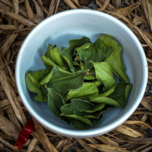 4 Herbs to Reinvent Your Kitchen