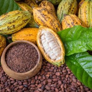 Nacional Cacao: The Return of a Legend